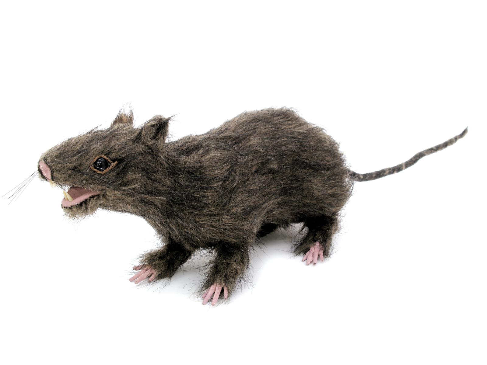 EUROPALMS Ratte, lebensecht mit Fell 30cm