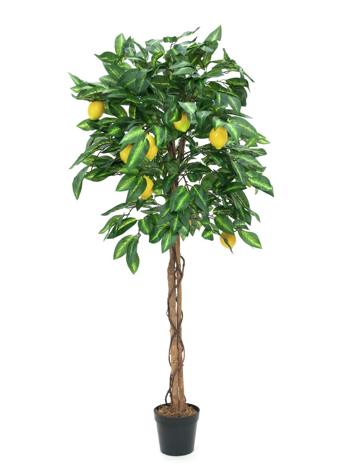 EUROPALMS Zitronenbaum, Kunstpflanze, 150cm